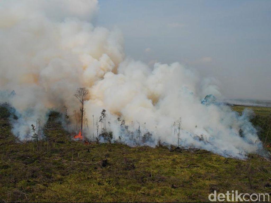 Polisi Tangkap 3 Pelaku Pembakar Hutan Taman Nasional Tesso Nilo