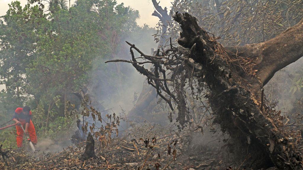 Kebakaran Hutan Kembali Terjadi di Riau