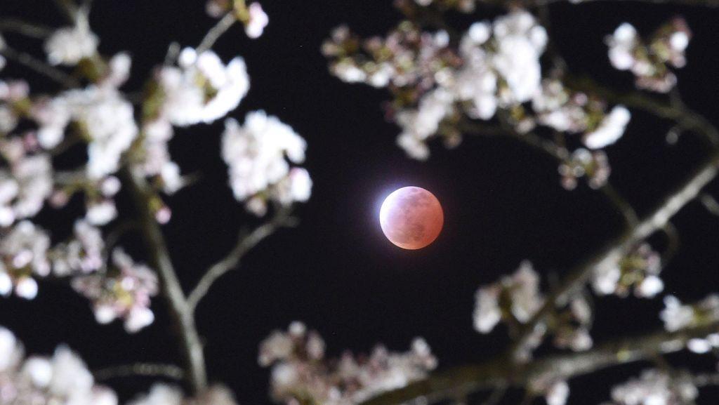 Gerhana Bulan Supermoon Tak Bisa Dilihat di RI, Tunggu Gerhana Matahari