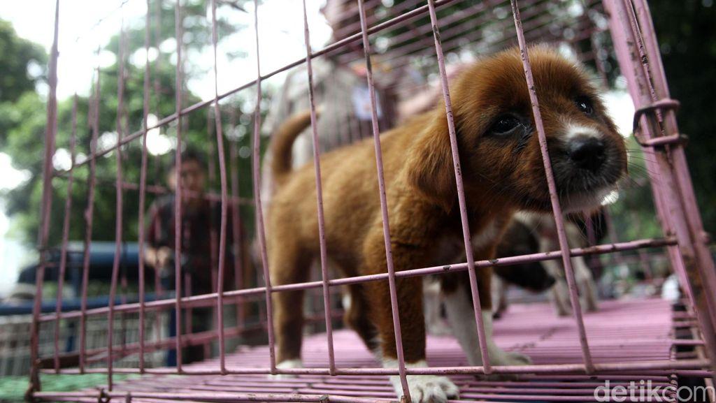 Lawan Rabies, 400 Ribu Anjing di Bali Akan Divaksinasi