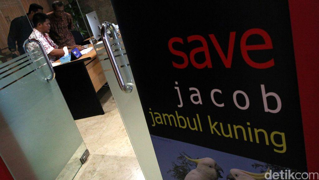 Lewat #SaveSiJambulKuning, Publik Sadar Pelihara Satwa Langka itu Enggak Keren