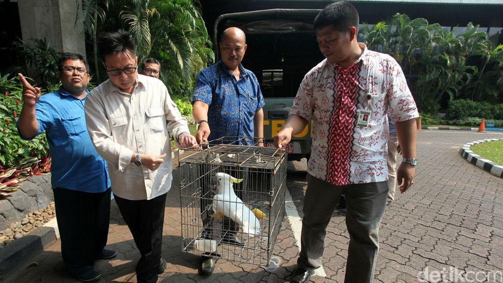 BKSDA dan Polda Aceh Sita 5 Ekor Satwa Dilindungi dari Rumah Warga