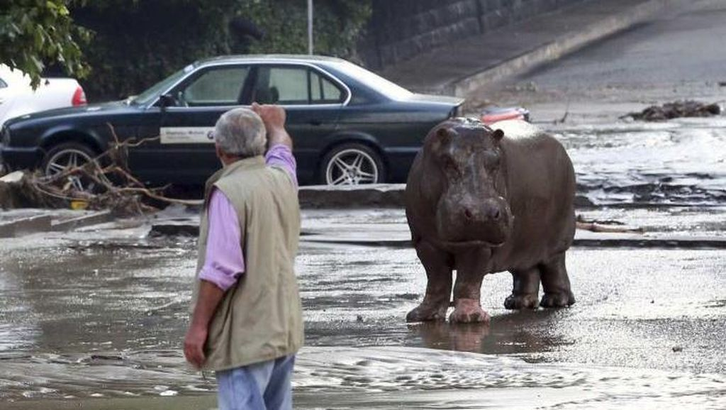 Banjir di Georgia, Kuda Nil, Harimau dan Serigala Kabur ke Jalan