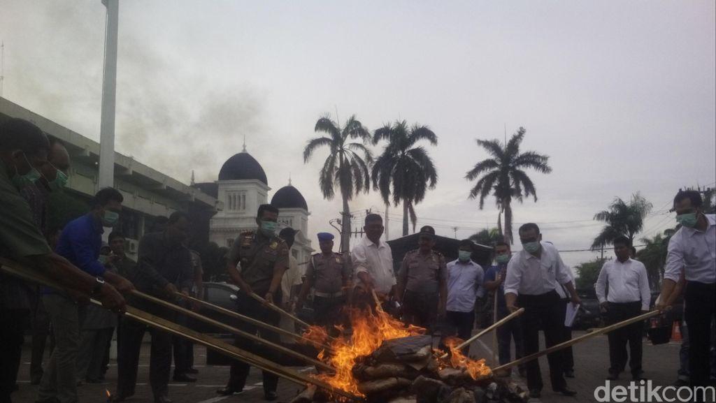 Polresta Banda Aceh Musnahkan 57 Kg Ganja yang Ditangkap di Bandara
