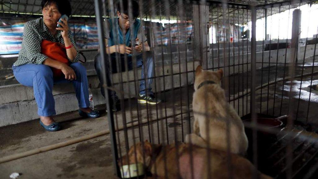 Yang Xiaoyun, Penyelamat Anjing dari Kejamnya Festival Yulin di China