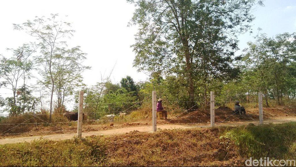 Cuma Dibatasi Kawat Berduri, Waspadai Hewan Menyeberang di Tol Cipali