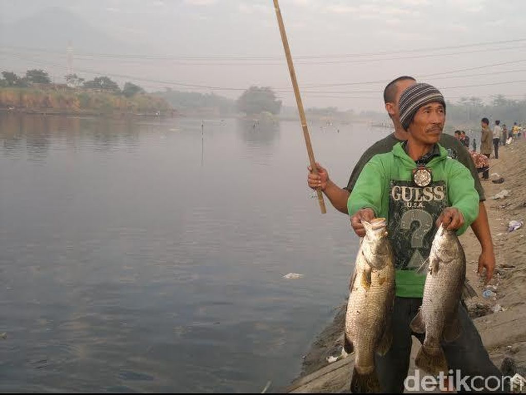 Warga Berebut Ikan Mabuk di Kali Porong Sejak Sahur