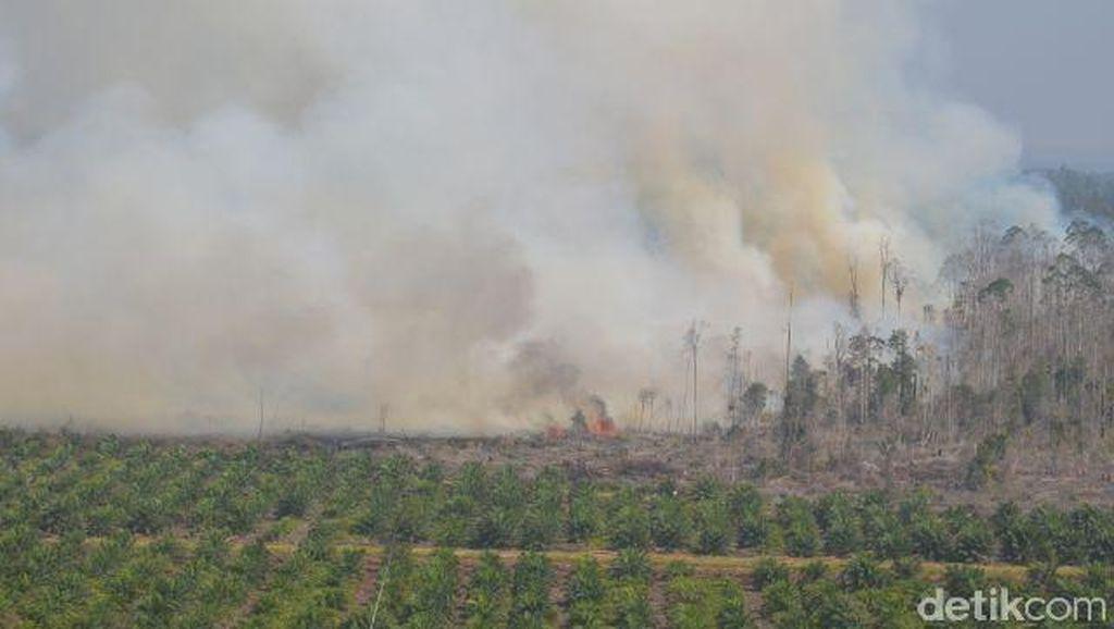 Menhut: Pemadaman Kebakaran Hutan dengan Bahan Penyerap Oksigen akan Diuji Coba