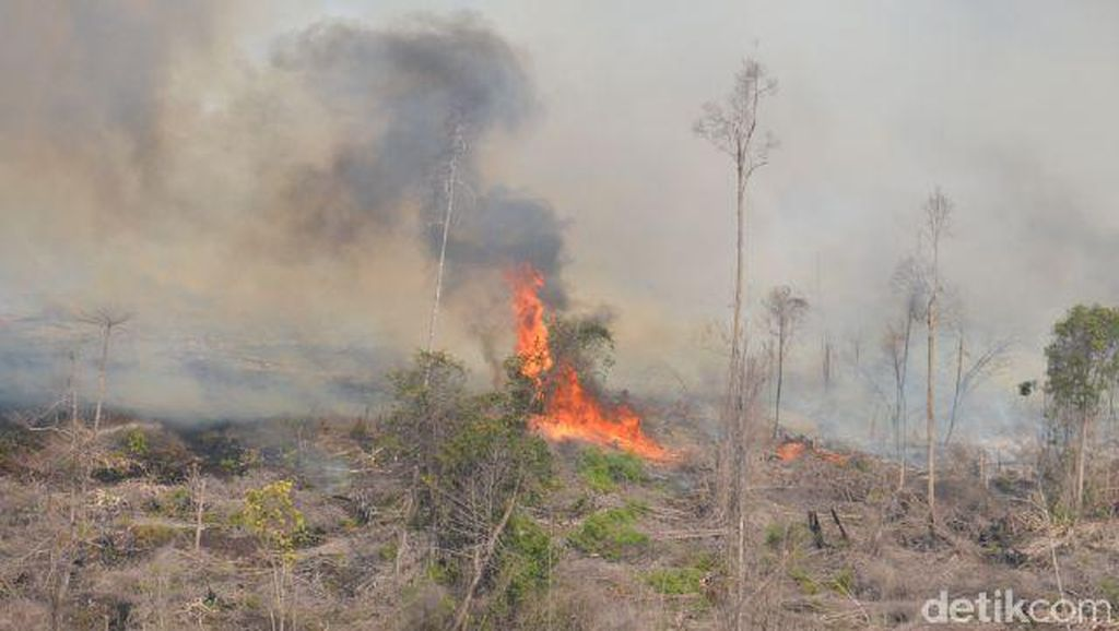 BNPB: 99,9 Persen Kebakaran Hutan dan Lahan Dilakukan Secara Sengaja