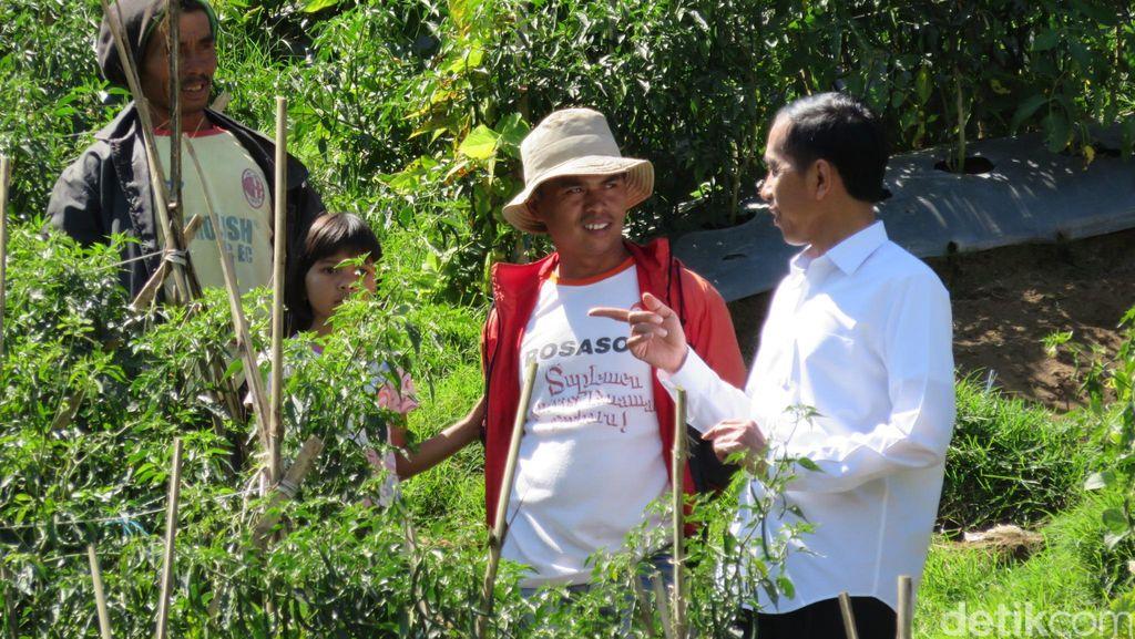Saat Jokowi Tiba-tiba Turun dari Mobil dan Blusukan ke Kebun Cabai