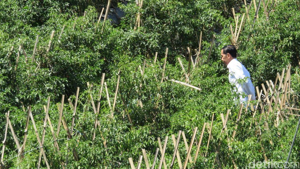 Jokowi: Pemerintah Akan Ajukan Revisi UU yang Atur JHT