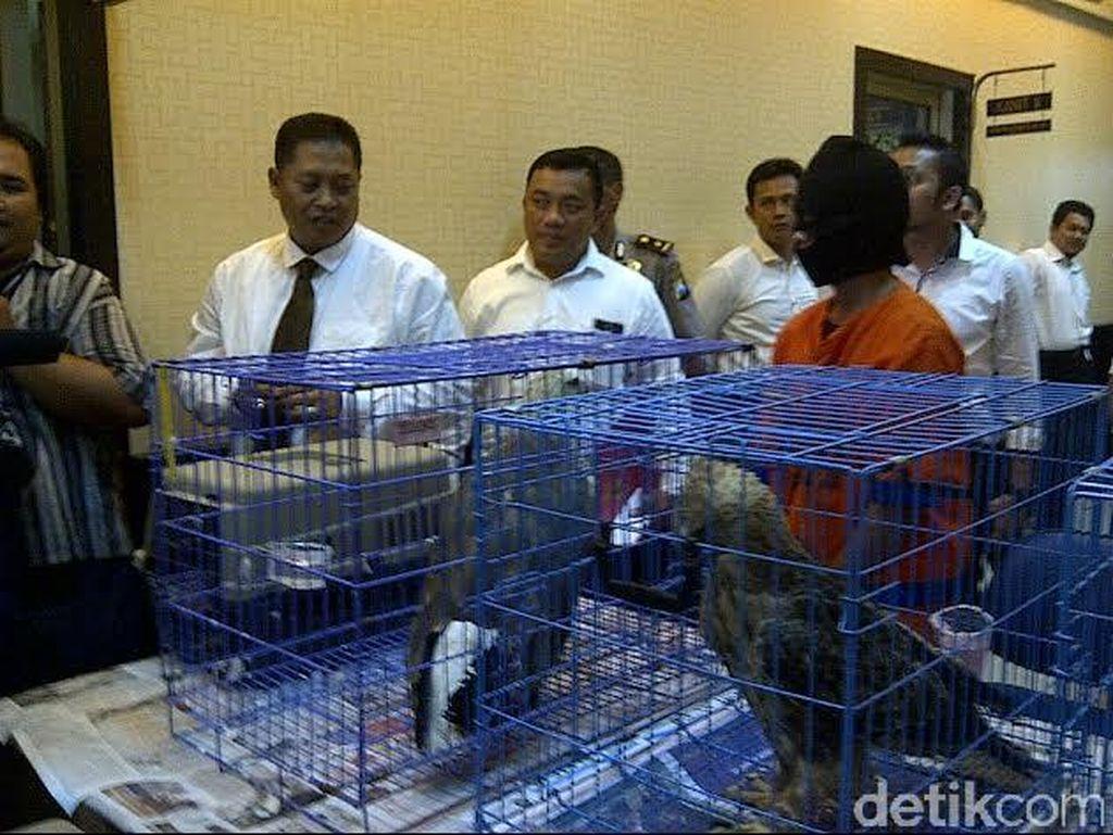 Perdagangan Satwa Burung Elang Dibongkar Polda Jatim
