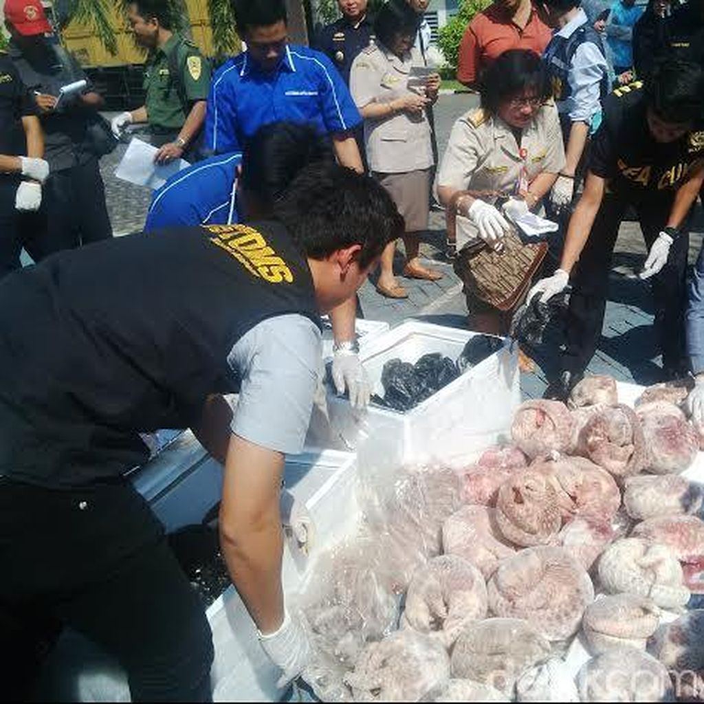 Penyelundupan 1.390 Kg Daging Trenggiling ke Singapura Digagalkan