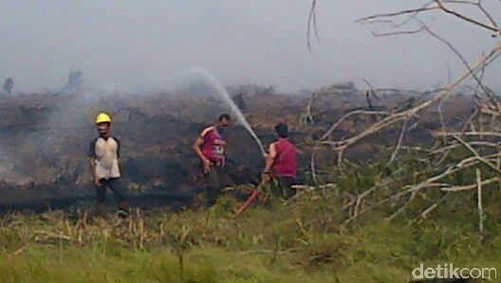 Polisi Tetapkan 223 Tersangka Kasus Kebakaran Lahan dan Hutan