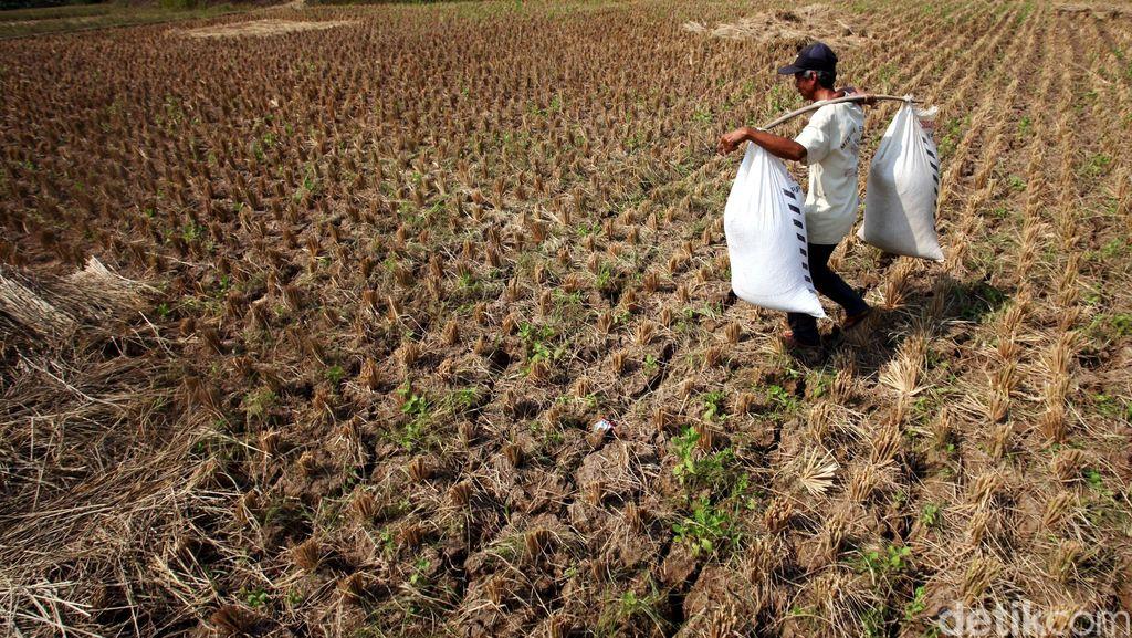 578 Ribu Kepala Keluarga di Indonesia Kekurangan Air Bersih
