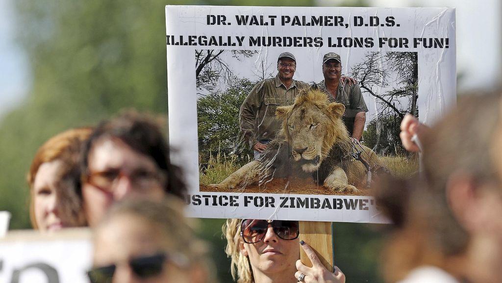 Singa Terkenal Zimbabwe Dibunuh, Dokter Gigi AS Diburu