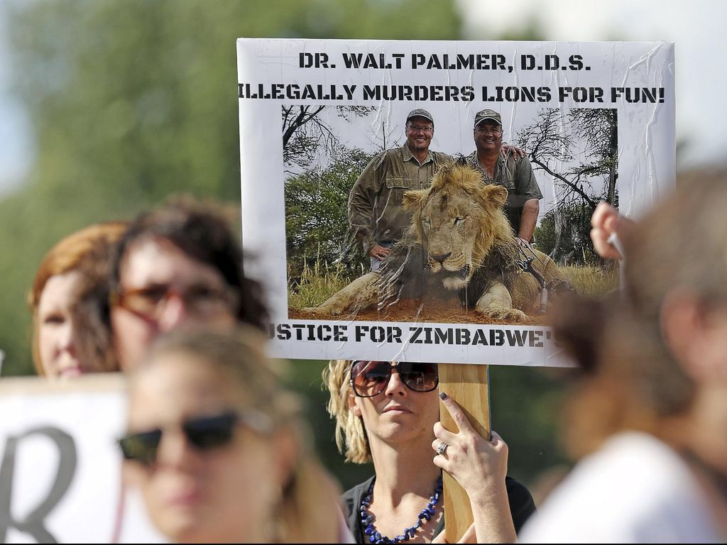 AS Selidiki Pembunuhan Singa Cecil Kesayangan Zimbabwe