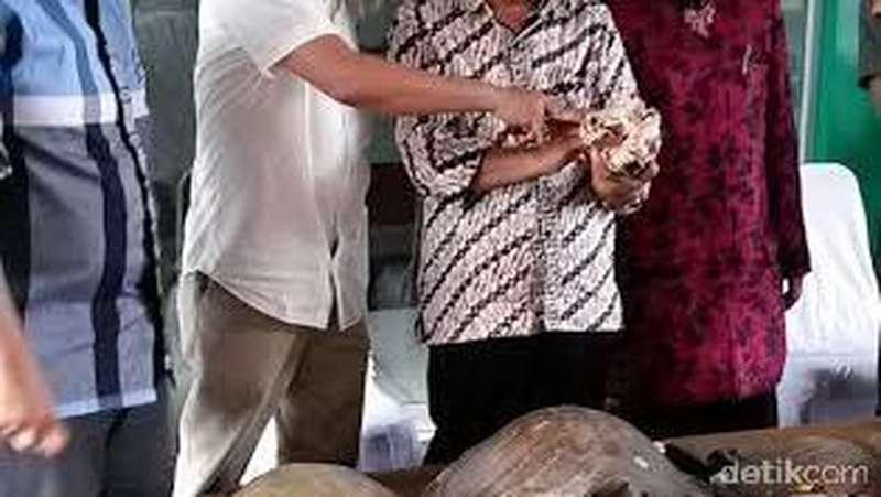 Ada Tengkorak Harimau Jawa Langka yang Disita BKSDA Jabar