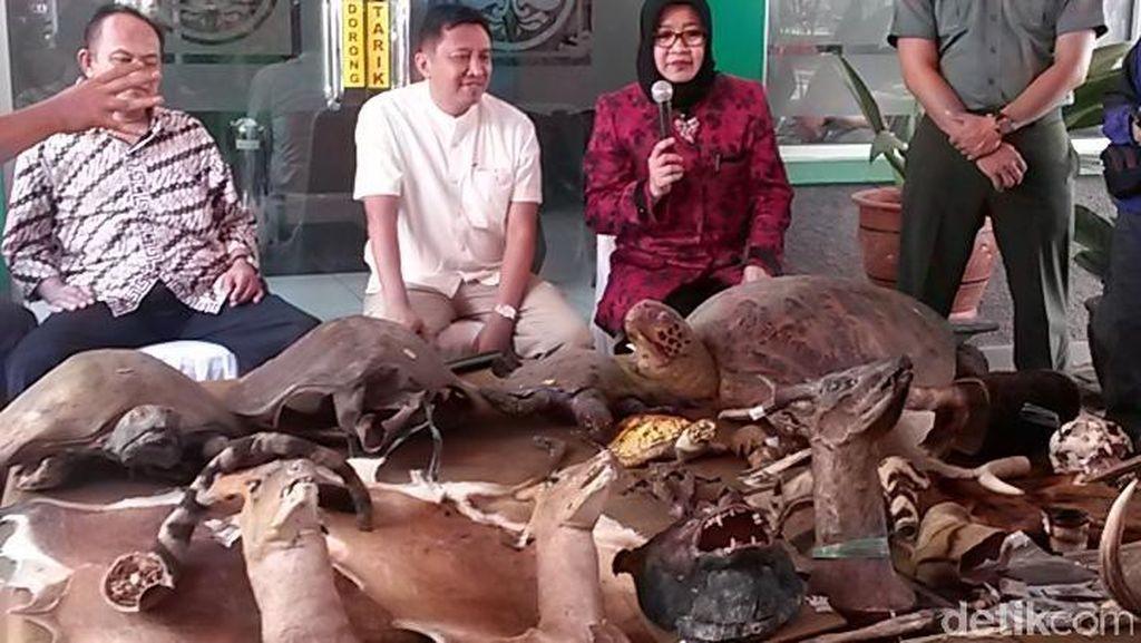 BKSDA Sita 69 Opsetan Satwa Liar Dilindungi dari Toko Barang Antik di Bandung