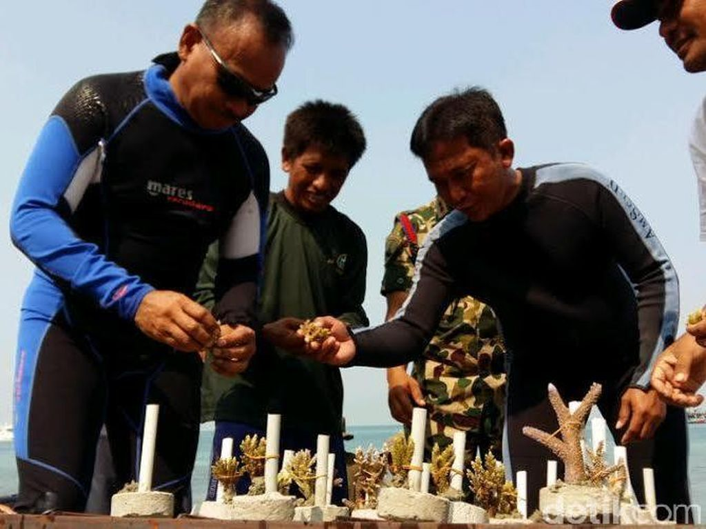 Aksi Dankormar Tanam Terumbu Karang di Pulau Damar
