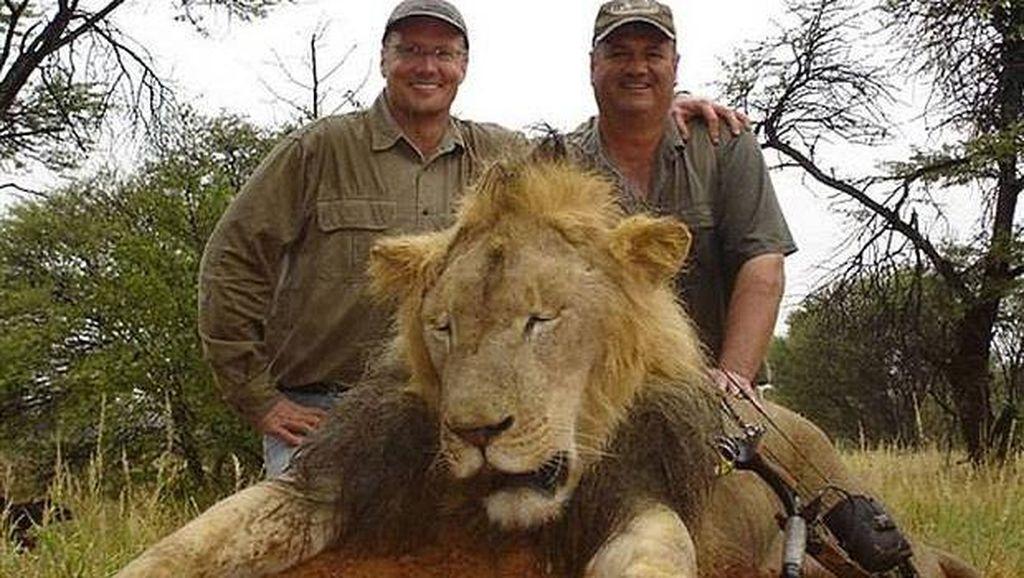 Dunia Mengutuk Dokter Gigi AS Pembunuh Cecil, Singa Kesayangan Zimbabwe