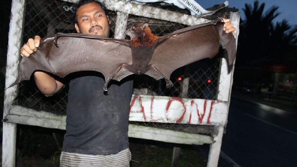 Ini Penampakan Kalong Sumatera yang Terancam Punah Akibat Perburuan!