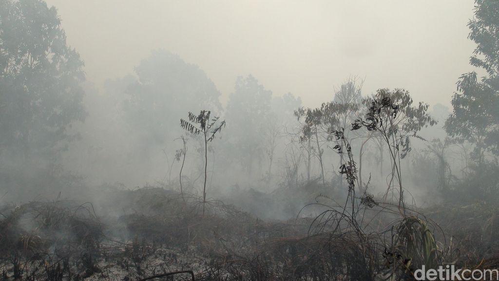Kemlu: Ada 5 Negara yang Bersedia Bantu RI Atasi Kebakaran Hutan dan Asap