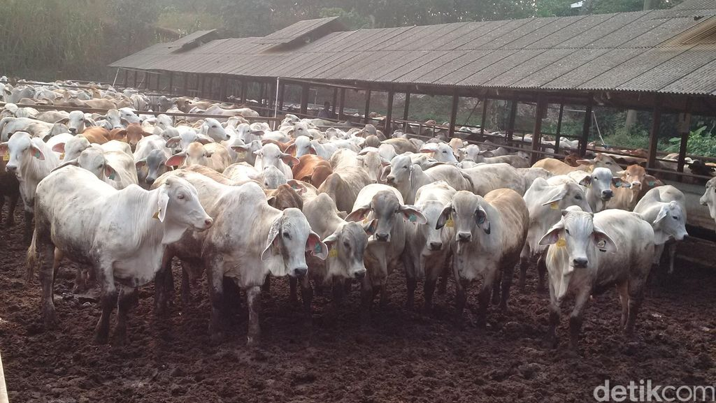 Bareskrim Temukan Surat Larangan Berdagang Daging Sapi