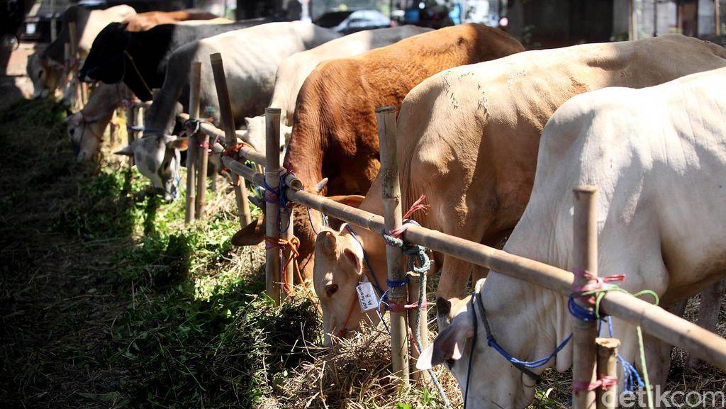KLHK Imbau Warga Tak Gunakan Kantung Plastik untuk Pembagian Hewan Kurban