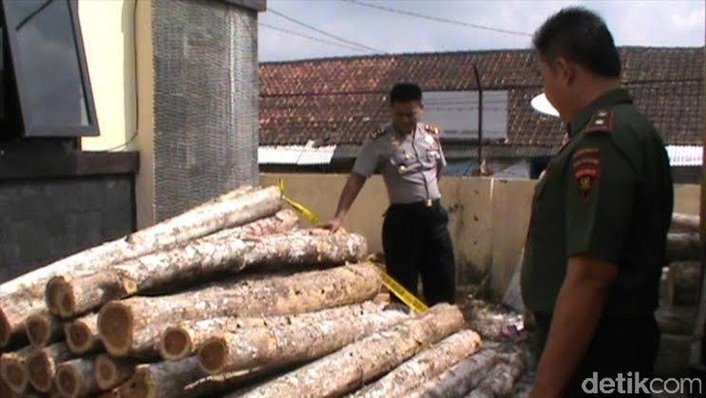 Belasan Ribu Pohon Jati Milik Perhutani di Tasikmalaya Dijarah