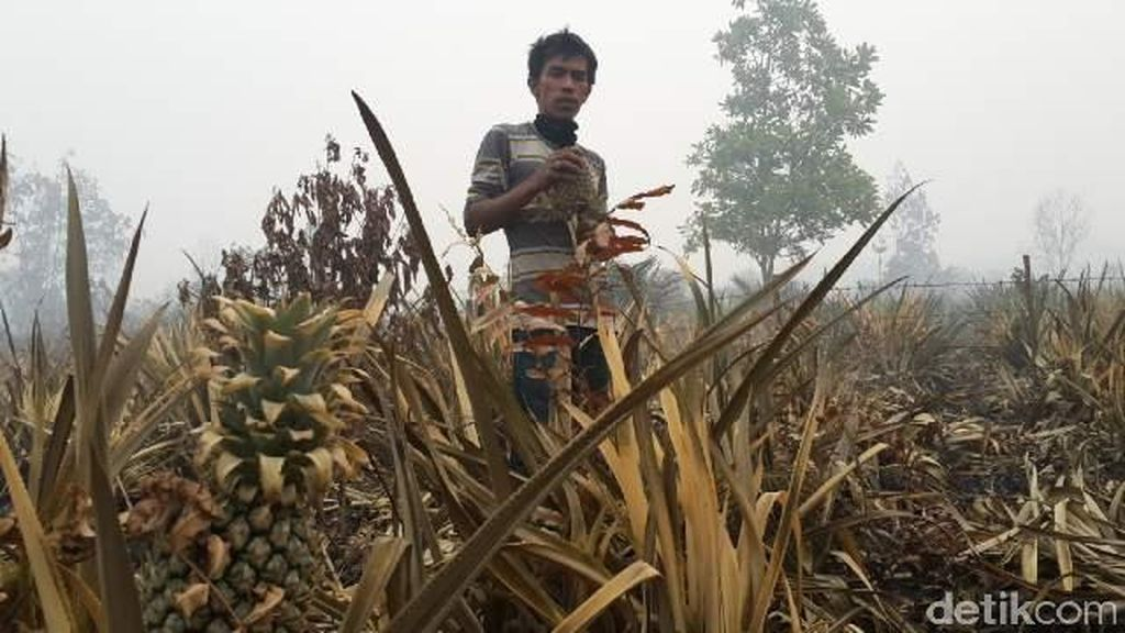 Sidang Gugatan Rp 1 Triliun Kasus Kebakaran Hutan Ditunda