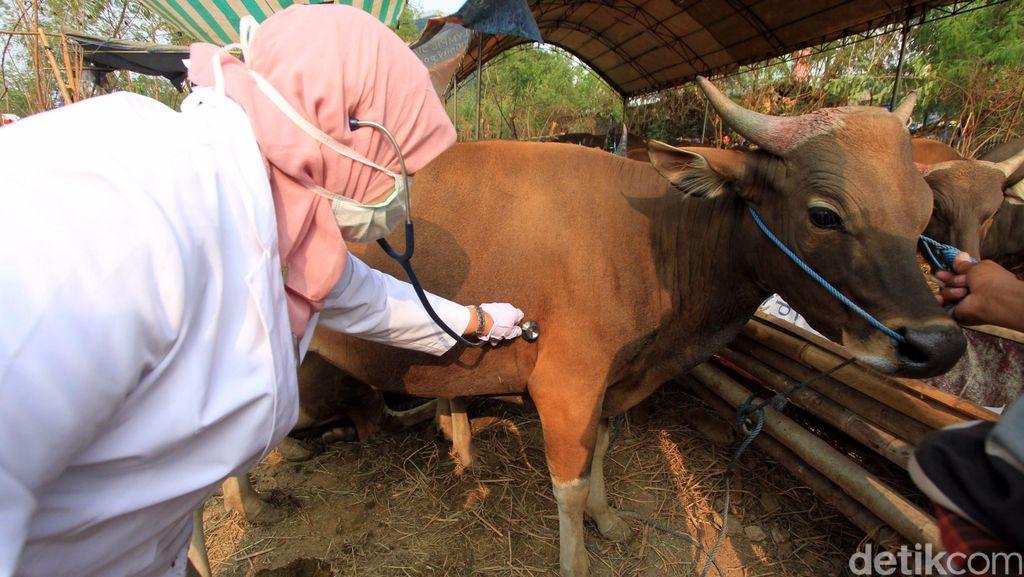 Distan Siapkan 30 Ribu Kalung Sehat untuk Hewan Kurban di Kota Bandung