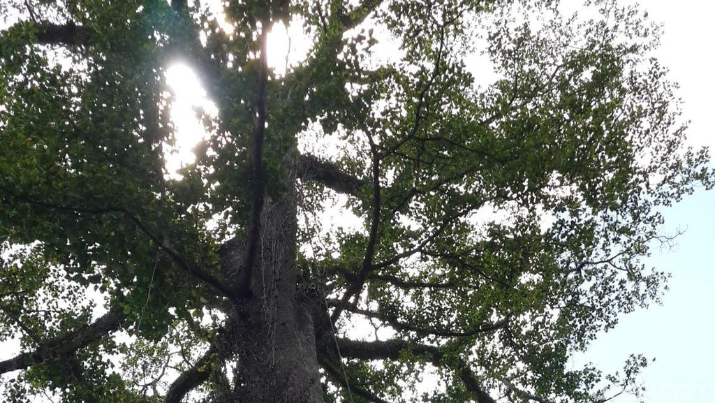 Belajar dari Palaka Tua, Jagalah Pohon Maka Pohon Akan Menjaga Air Kita