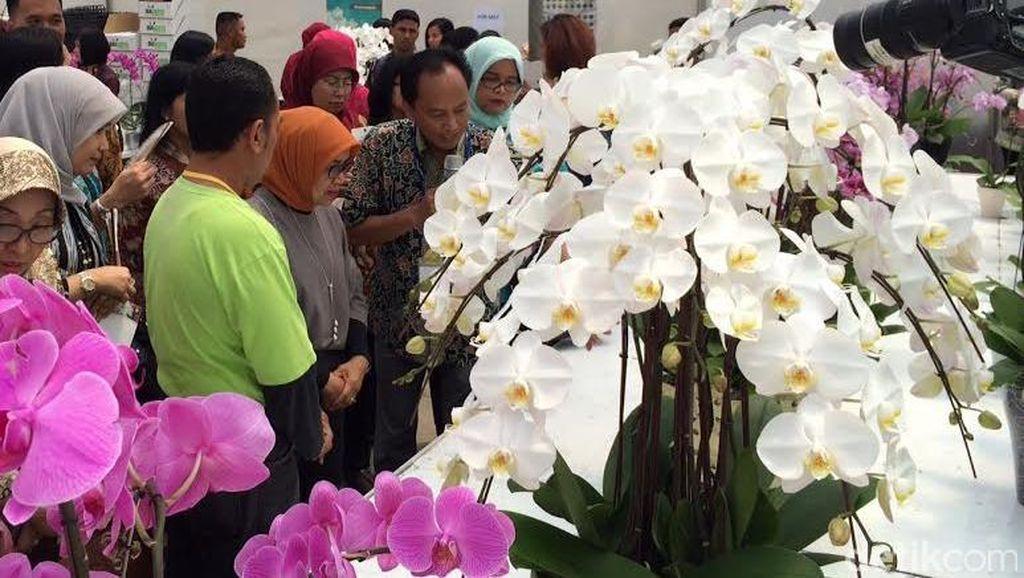 Kunjungi Kebun Anggrek di Cikampek, Mufidah Kalla: Saya Suka Anggrek Bulan