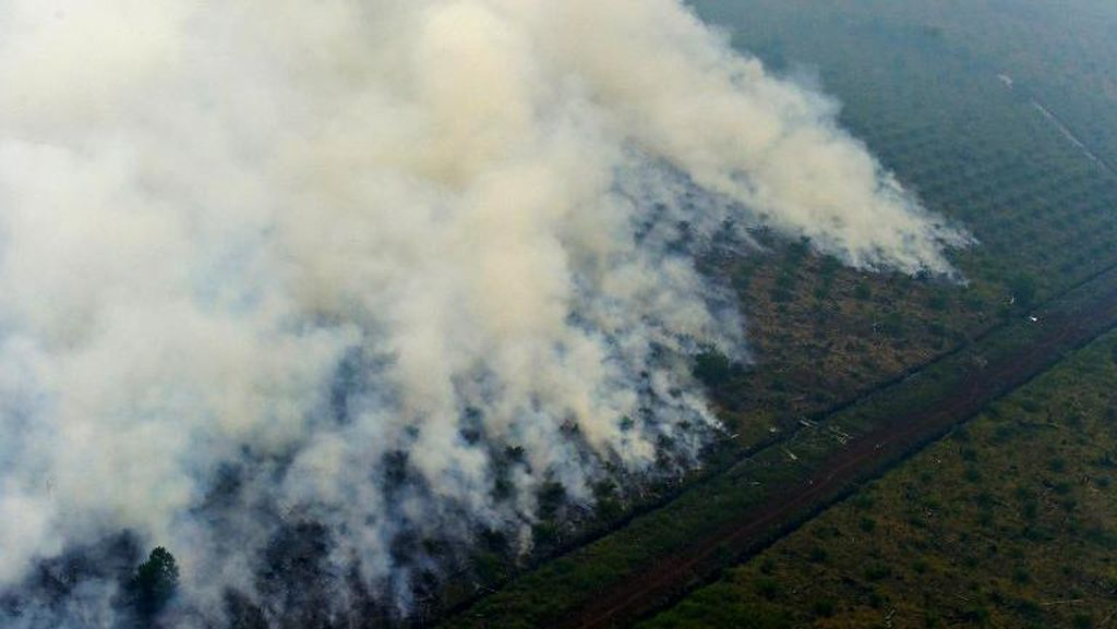 Istana Kaget Polda Riau Hentikan 16 Perkara Kebakaran Hutan di Riau