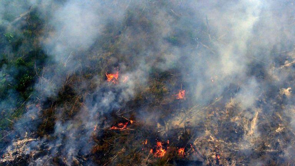 Istana Minta Kapolri Evaluasi SP3 16 Perusahaan Pembakar Hutan di Riau