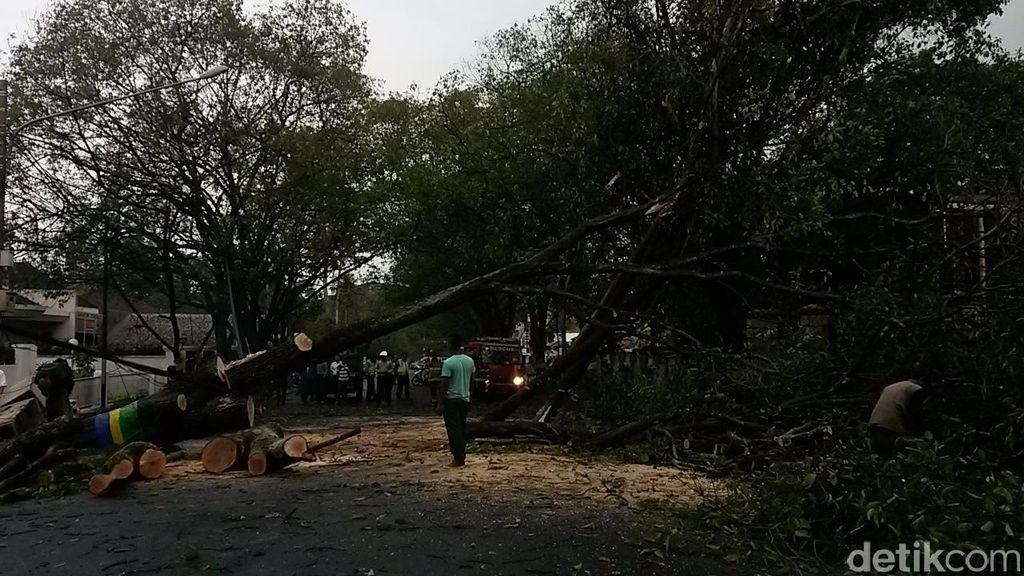 Dilanda Hujan dan Angin Kencang, 10 Pohon Tumbang di Bandung