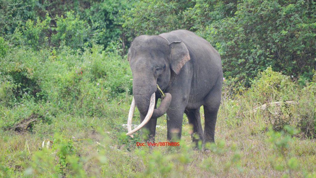 Kisah Kematian Yongki dan Kesedihan Tulus dalam Kenangan Video Klip Gajah