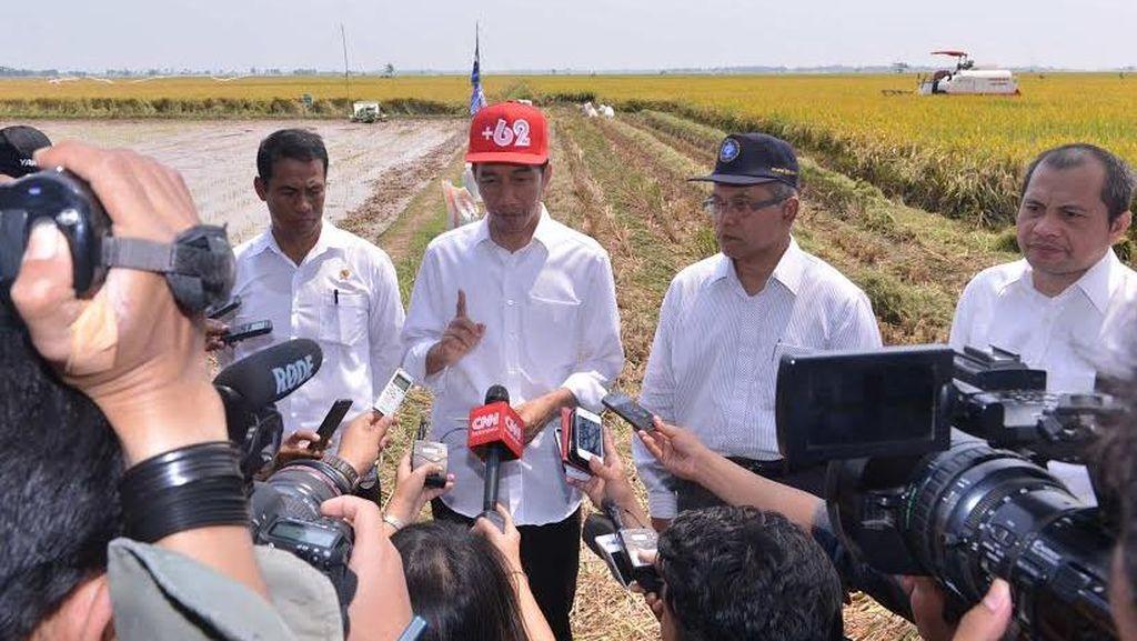 Akhir Pekan Ini Jokowi akan Panen 40 Ton Padi di Sukoharjo, Jawa Tengah