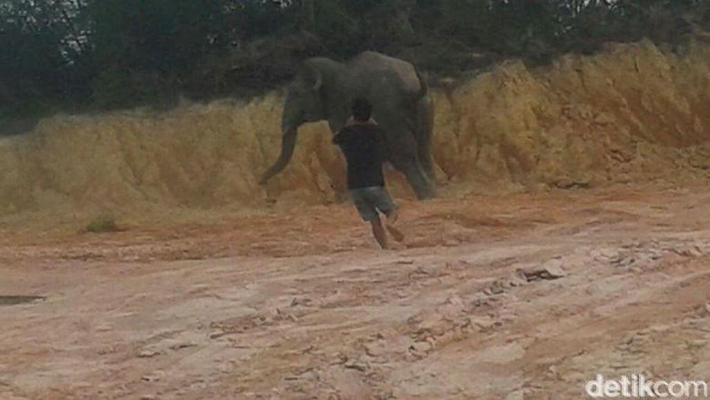 Tersasar ke Permukiman, Gajah Liar Resahkan Warga Desa Tungkal Ulu Jambi