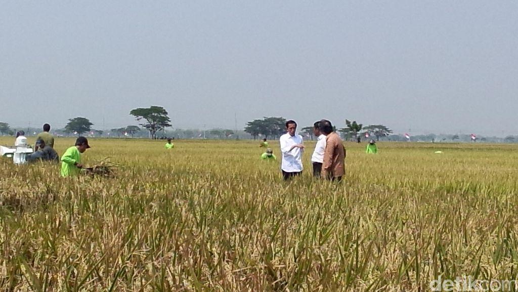 Jokowi: Saya ke Karawang dan Sukoharjo untuk Pastikan Produksi Padi Naik