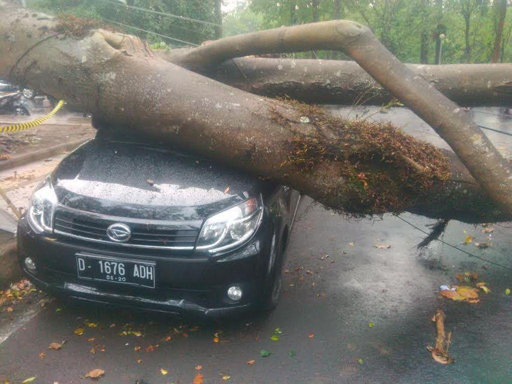 Begini Detik-detik Mencekam Saat Pohon Timpa 6 Mobil di Depan ITB