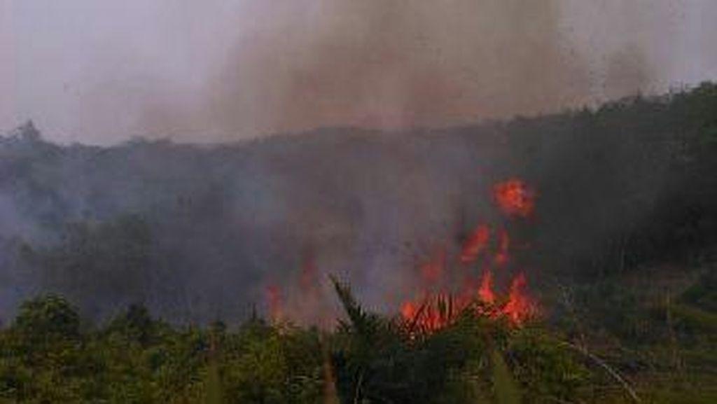 Malaysia: Kebakaran Hutan di Indonesia Tak Akan Padam Tanpa Hujan