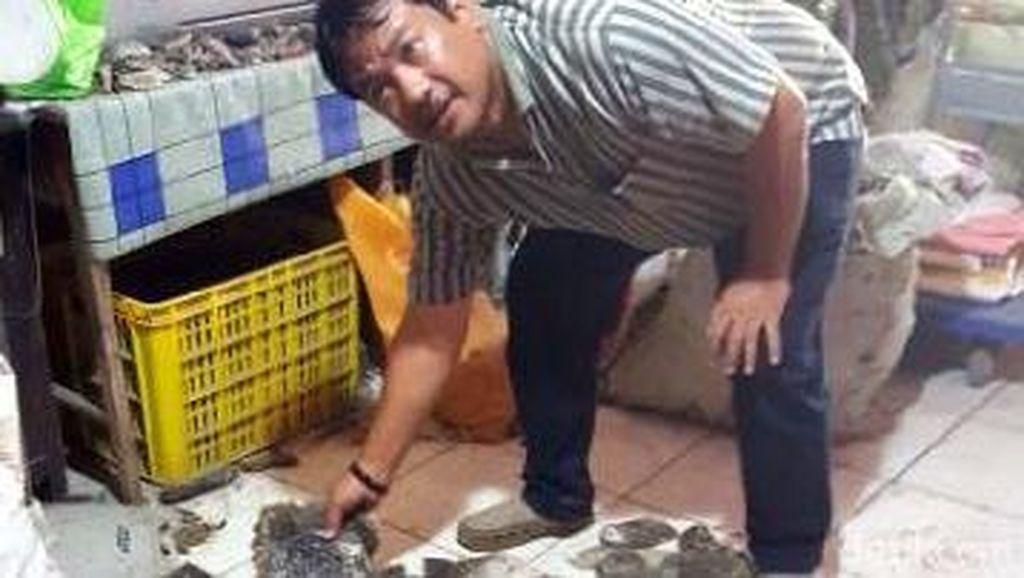 Polisi Bekuk Penjual Sisik Penyu, Kuda Laut dan Tanduk Rusa Kering