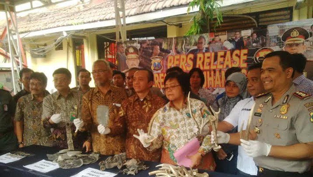Menteri Siti Apresiasi Pengungkapan Kasus Penjualan Tubuh Satwa Dilindungi