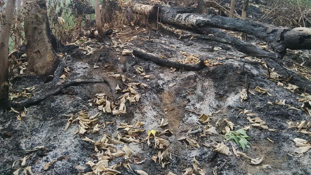 Tak Ditemukan Serpihan Benda Asing di Bengkulu, ini Penampakan Lokasinya