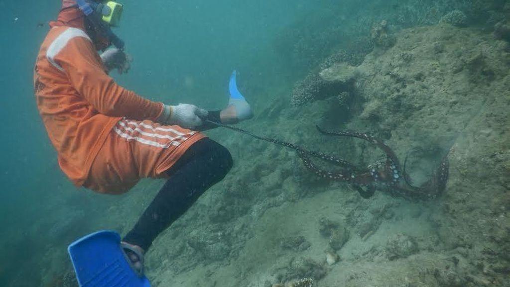 Serunya Melihat Anak Pulau Nasi Mencari Gurita