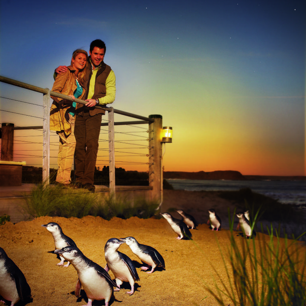 Victoria Jaga Habitat Hewan Liar, Uang Datang dari Turis untuk Konservasi
