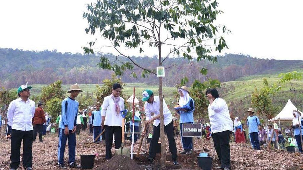 Resmikan Taman Hutan Terluas, Jokowi: Paru-paru Dunia Kembali Berjaya