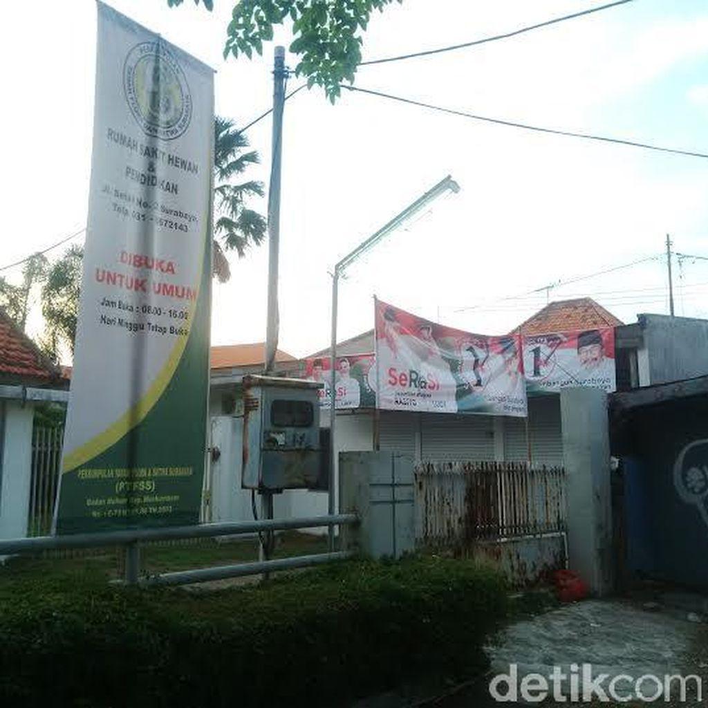 Pengawas Pilkada Surabaya akan Copoti Spanduk Penantang Risma di RS Hewan